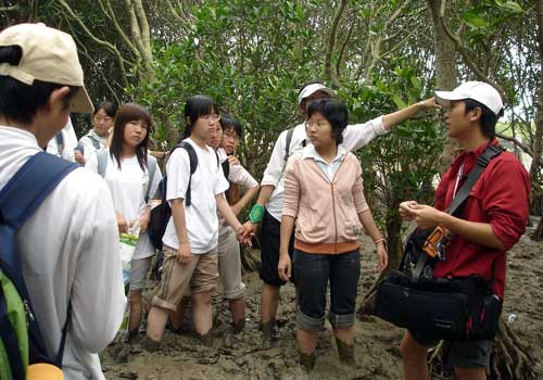 P095.中国红树林保护项目